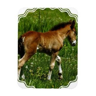 Foal Premium Magnet