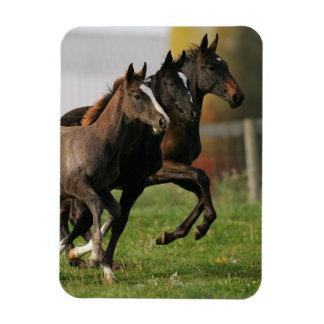 Foal Running Rectangular Photo Magnet