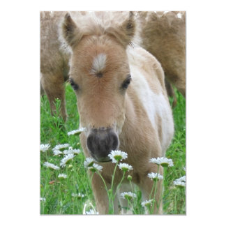 Foal Smelling Flowers Invitation