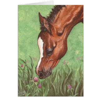 Foal Sniffing Clover Card