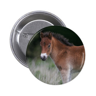 Foal Standing 6 Cm Round Badge