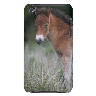 Foal Standing iPod Touch Covers