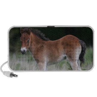 Foal Standing iPod Speaker