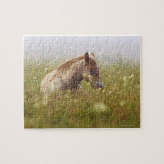Foal wildflower meadow morning mist Piano Grande Puzzles
