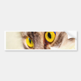 focus on goal and success cat eyes bumper sticker