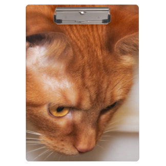 Focused Humane Society cat Clipboards
