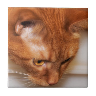 Focused Humane Society cat Tile