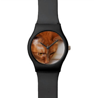 Focused Humane Society cat Watch