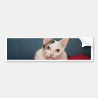 Focused Kitty Cat Bumper Stickers