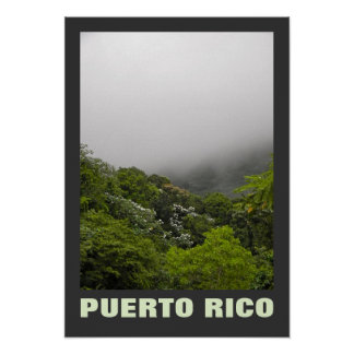 Fog and Tropical Trees El Yunque Puerto Rico Poster