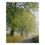 Fog covered road, Cades Cove, Great Smoky Poster