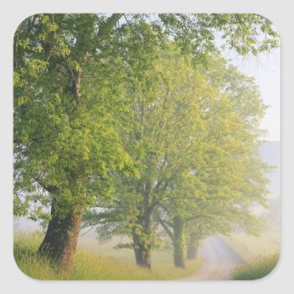 Fog covered road, Cades Cove, Great Smoky Square Sticker
