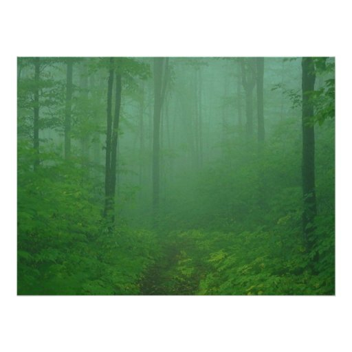 Foggy Forest Poster