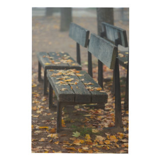 Foggy morning park bench, Germany Wood Canvas