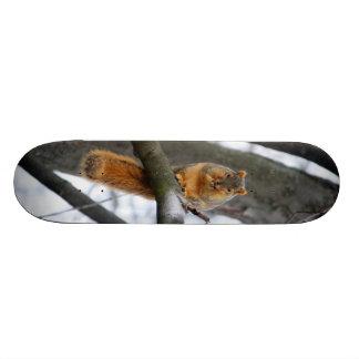 Foggy Morning Squirrel Skateboard Deck