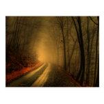 foggy wood post cards