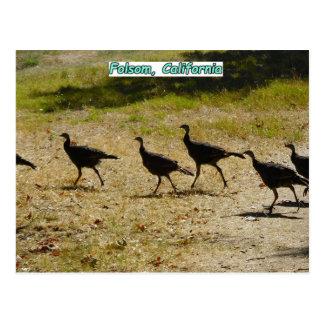 Folsom Icon: Wild Turkeys in City Park Postcard