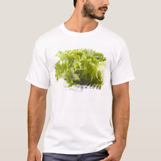 Food, Food And Drink, Vegetable, Lettuce, T-Shirt