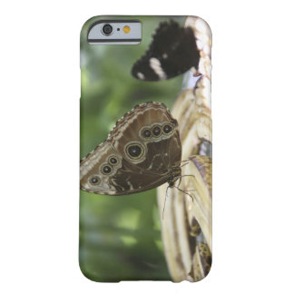 Food for Butterflies Barely There iPhone 6 Case