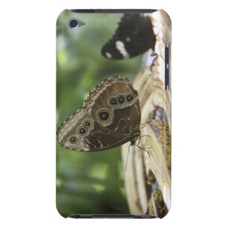 Food for Butterflies Case-Mate iPod Touch Case