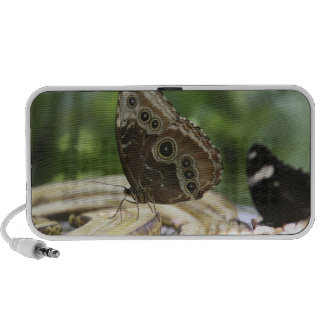 Food for Butterflies Notebook Speaker