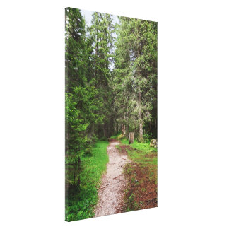 footpath on forest gallery wrapped canvas