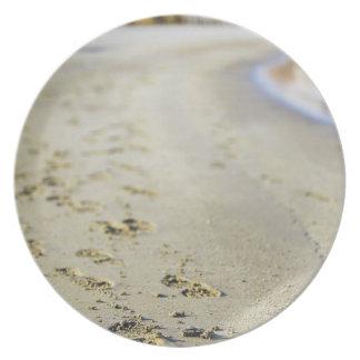 Footprint in coast. plate