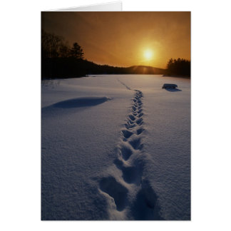 Footprints In the Snow blank note card