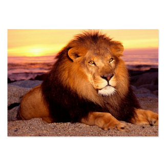For lion lovers. pack of chubby business cards