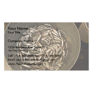 Forage fish research, Shumagin Islands Business Card Templates