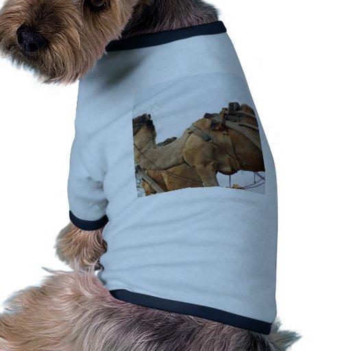 Foraging camel doggie tee shirt