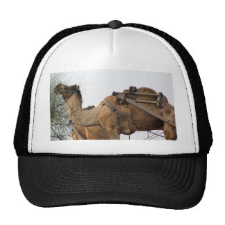 Foraging camel mesh hat