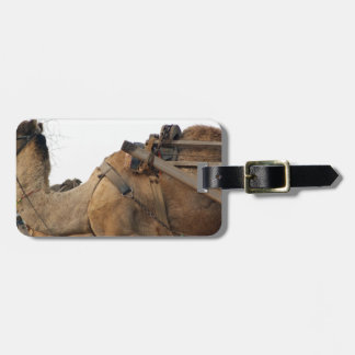 Foraging camel tags for luggage