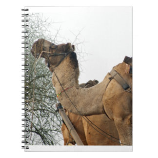 Foraging camel spiral note books
