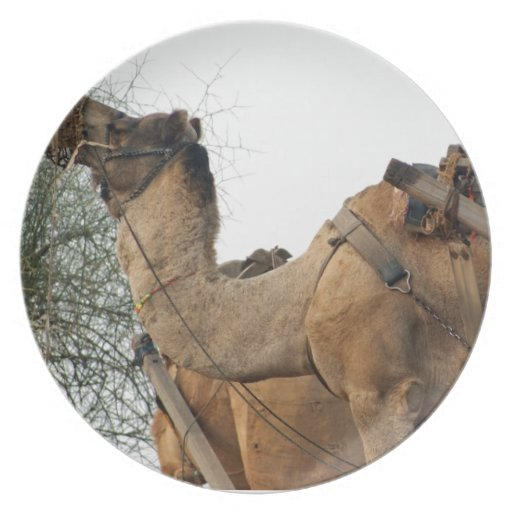 Foraging camel party plate
