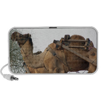 Foraging camel notebook speakers