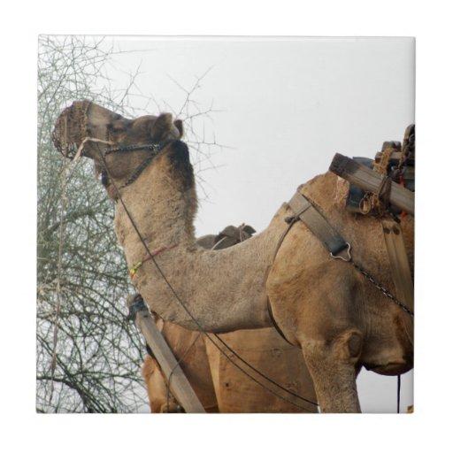 Foraging camel ceramic tile