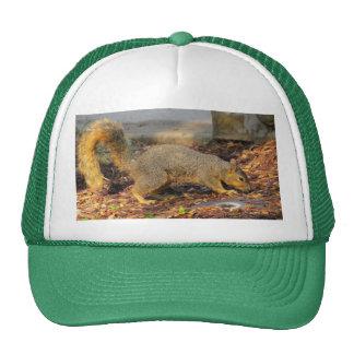 Foraging Fox Squirrel Mesh Hats
