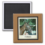 Forego Racehorse 1977 Square Magnet