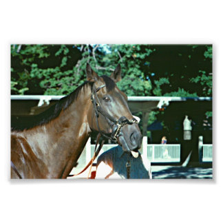 Forego Thoroughbred Racehorse Photo Print