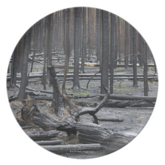 Forest after fire in Yellowstone National Park Party Plates