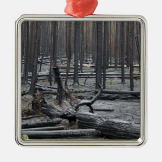 Forest after fire in Yellowstone National Park Silver-Colored Square Decoration