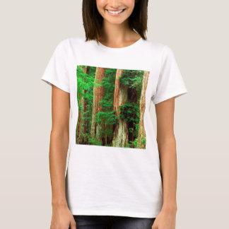 Forest Ancient Giants Big Basin Redwood Park T-Shirt