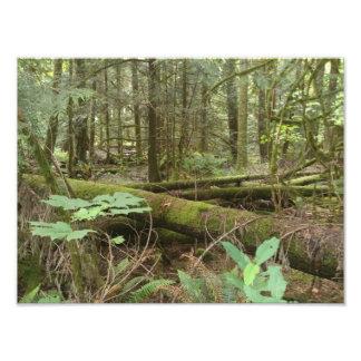 Forest Art Photo