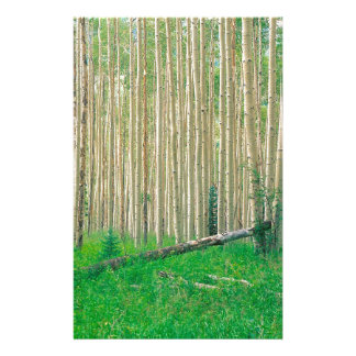 Forest Aspen Grove Independence Pass Stationery