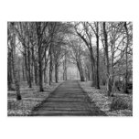 Forest, black/white post cards