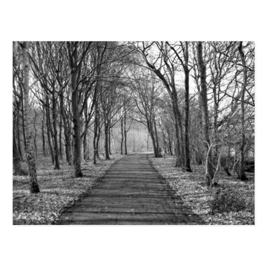 Forest, black/white postcard