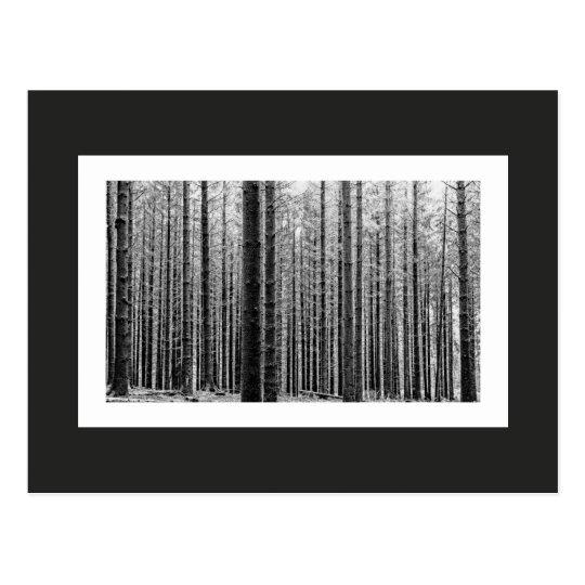 Forest (Black & White) Postcard
