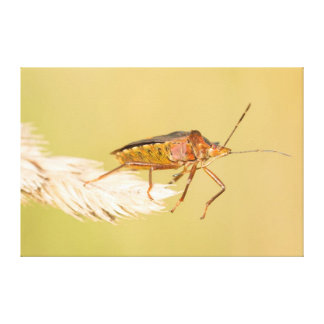 Forest Bug Canvas Print
