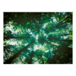 Forest Canopy Print